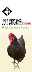巧活黑鑽土雞
